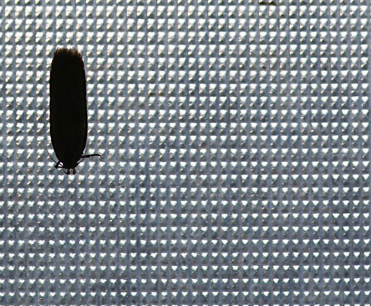 2555 Moth on Window crop.jpg