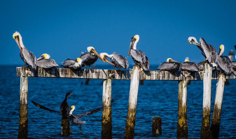 Pelican Group 120217.jpg