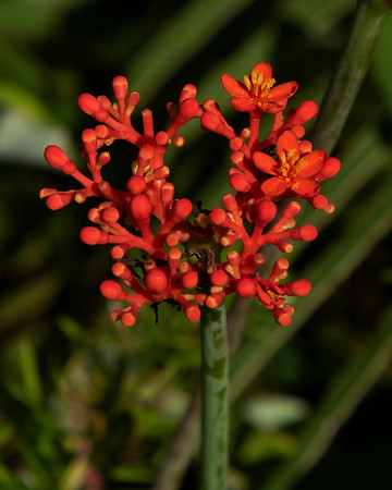Flowers Oahu