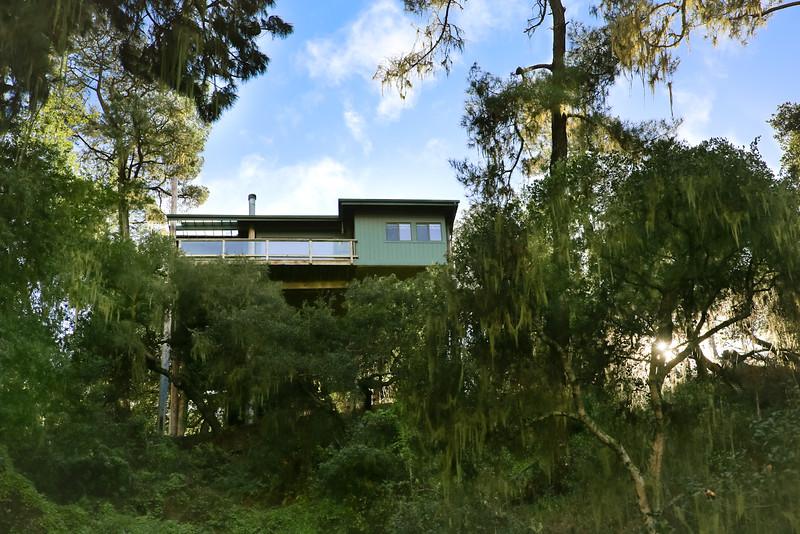 websize Rogers Street Treetop House for Sale-9868.jpg