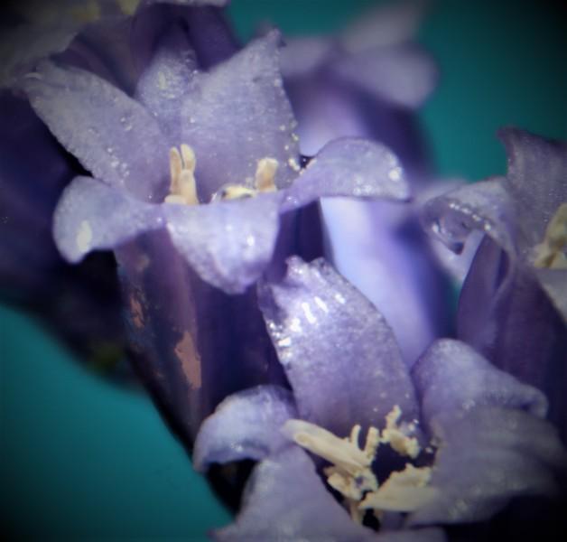 bluebells 5.jpg