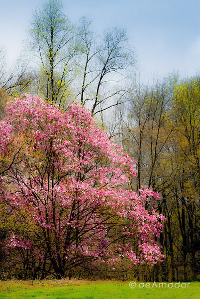 Cylburn Arboretum-aeamador-0046.jpg
