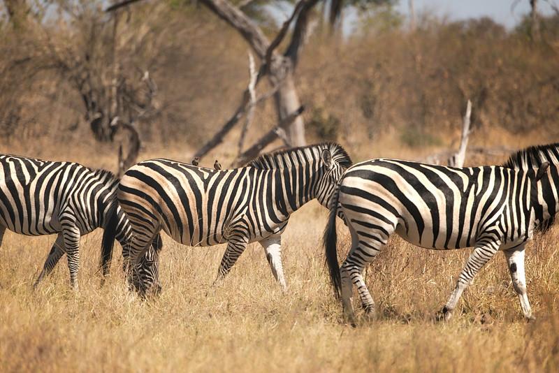 2014-08Aug-Okavango Masters-34-Edit.jpg