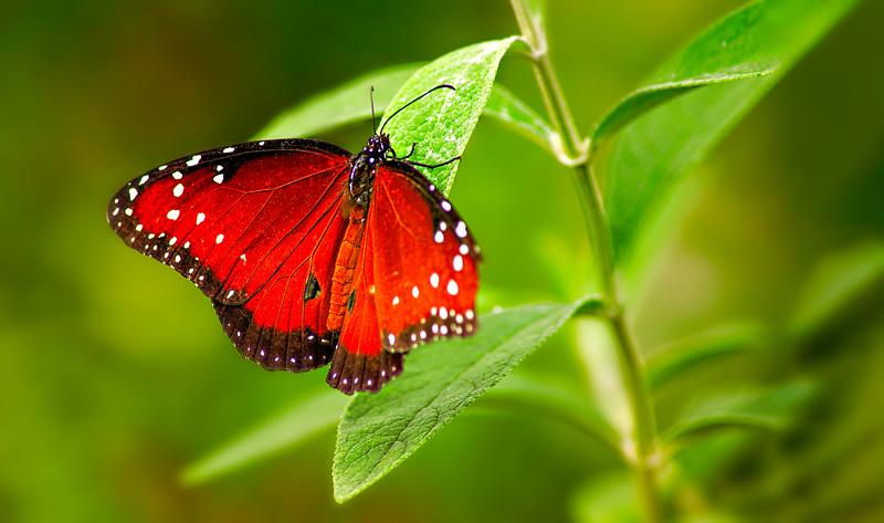 Butterfly-139.jpg