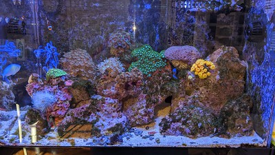 2020-02-14 - Reef Tank Update and VEE GEE STX-3 quality problems  and calibrating refractometer and other devices