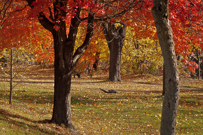 fall07.jpg