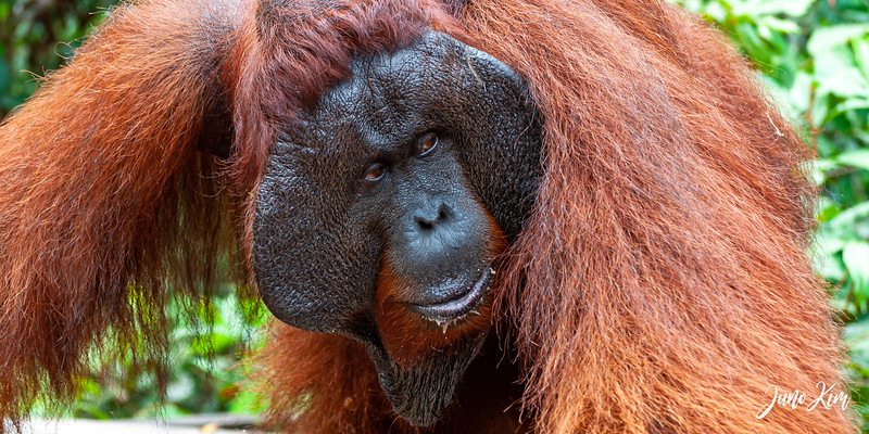 2012.10.07_Borneo_DSC_7315-Juno Kim.jpg