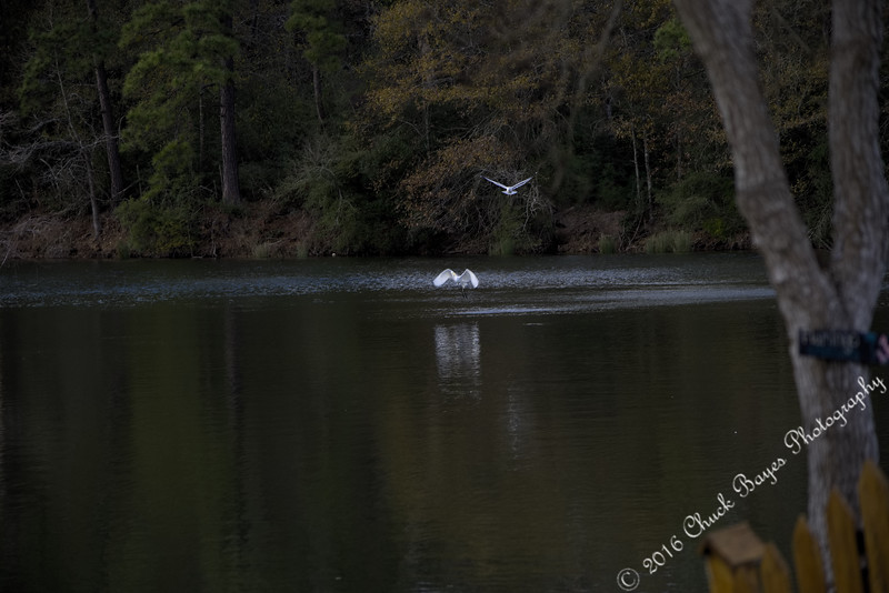 Lake2016-44.jpg