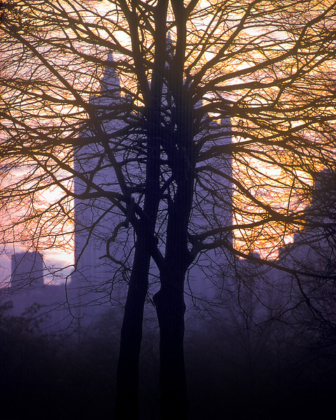 Bare Tree in Central Park