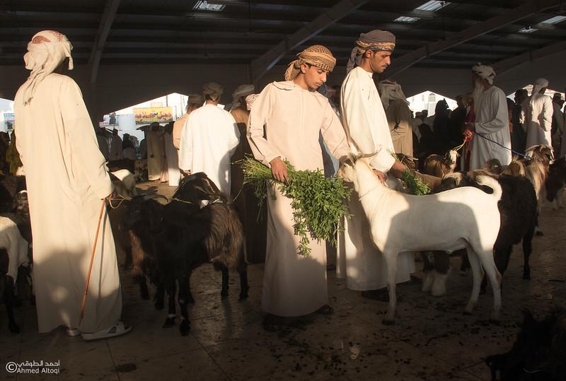 Traditional market (61)- Oman.jpg