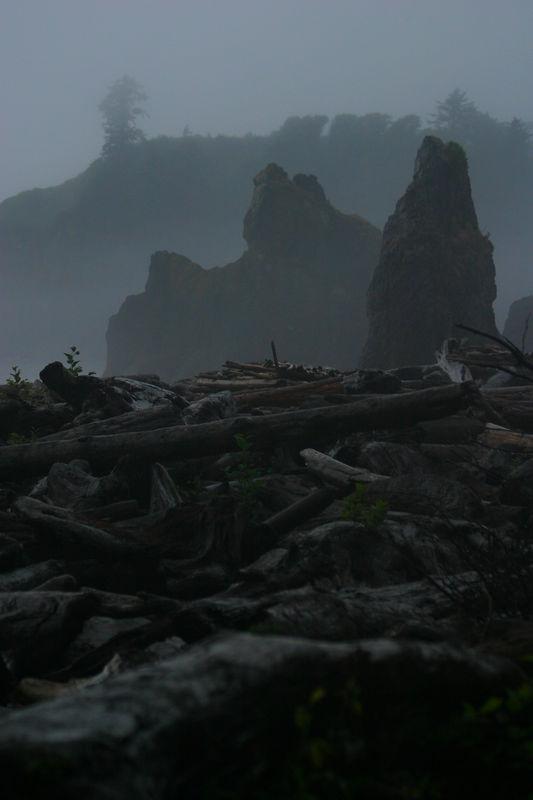 Rainforest_21aug04 101.jpg