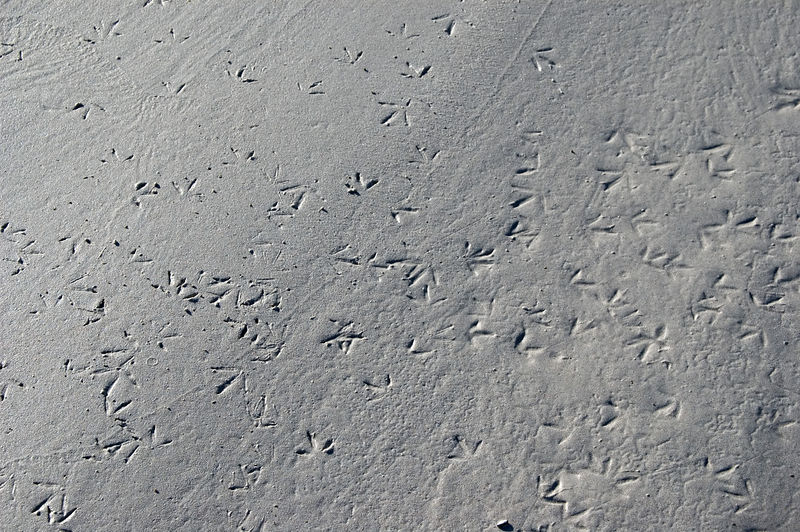 Bird tracks in the sand of Tortuga beach