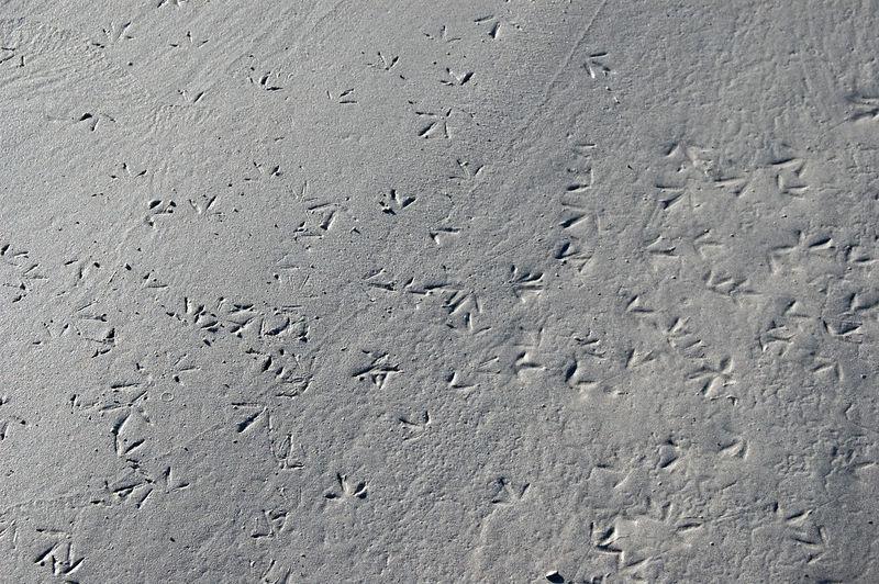 Bird tracks in the sand of Tortuga beach   (Dec 09, 2005, 04:11pm)