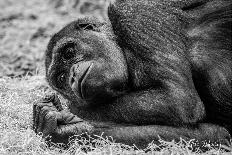 2016-10-05 Zoo Basel0U5A0439-Bearbeitet.jpg