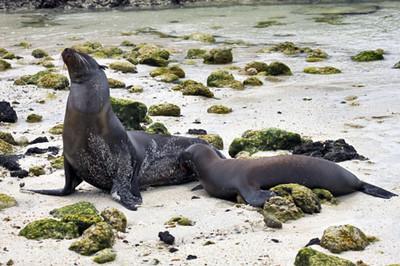 Slideshow - Galapagos Sea Lions 2011
