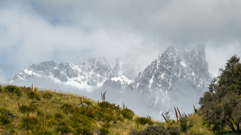 Speargrass on Hillside with Clouds and Mountains in Background, Mt Cook NP