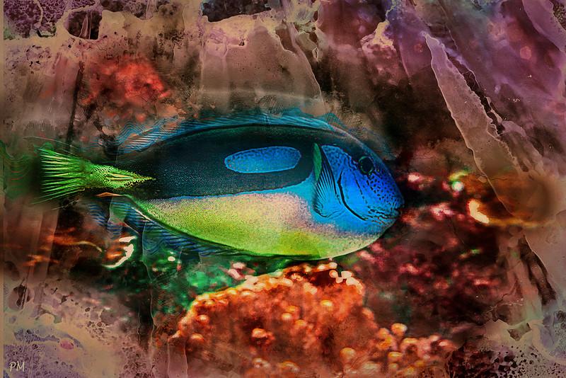 fish_1072wc.jpg