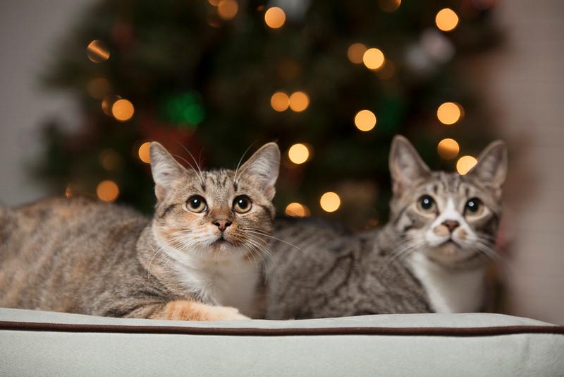 Marsee Christmas-81.jpg