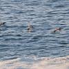 Pigeon Point, California