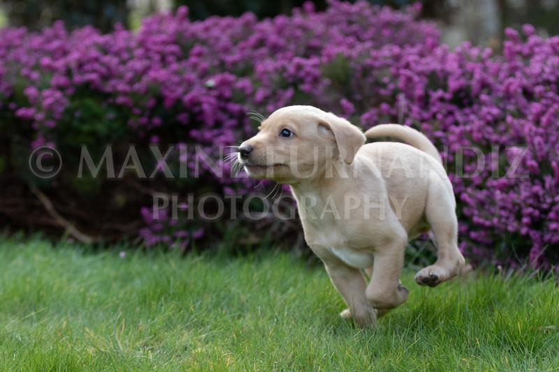 Weika Puppies 24 March 2019-6369.jpg