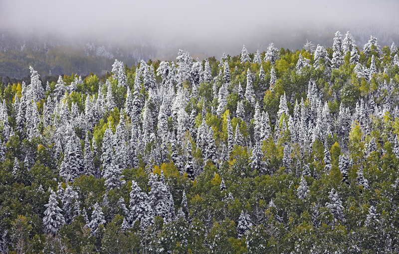 Fall storm shows the snow line on Mount Sneffels where flocked Spruce trees towering over green and yellow Aspen. View from County Road 5 outside Ridgeway, Colorado.