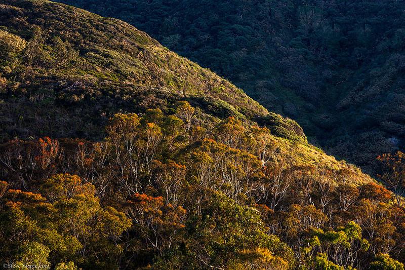Eucolyptus Trees Hills Shadow Montana de Oro State Park California.jpg