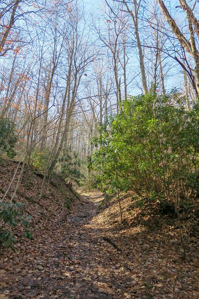Club Gap Trail -- 3,550'