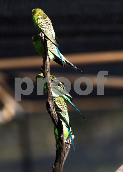 birds 7.jpg