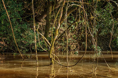 The Jungle: Yucatinga Lodge, the River and the Guarnari