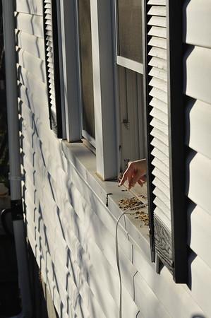 2012 Sage feeding birds - UNEDITED