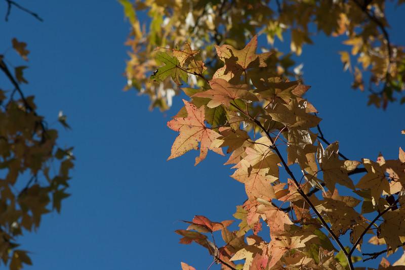 20121021-2012-10-2115-58-2213166.jpg