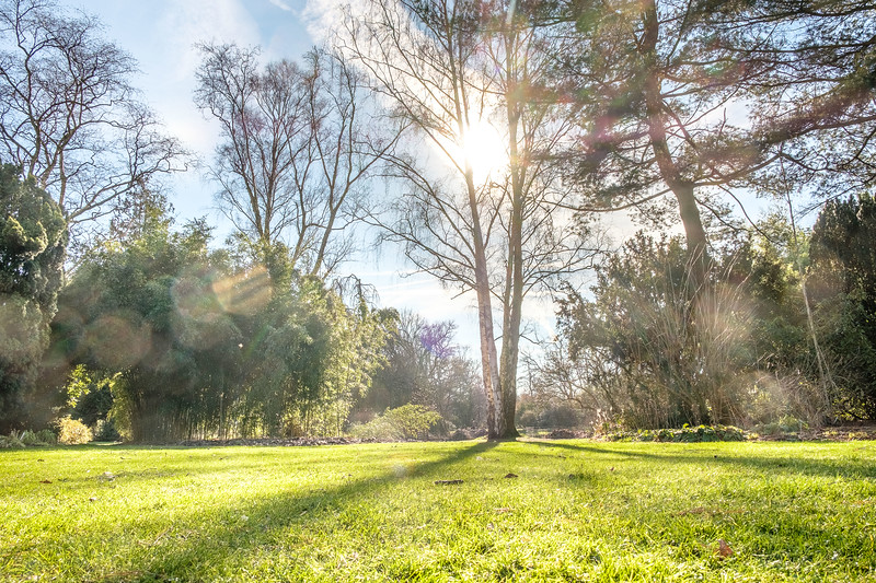 20190214_arboretum_064.jpg