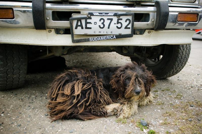Patagonia Dog, Chile