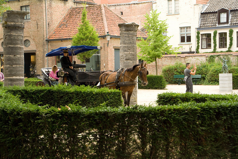 Bruges. This would be one of the four bay carriage horses.