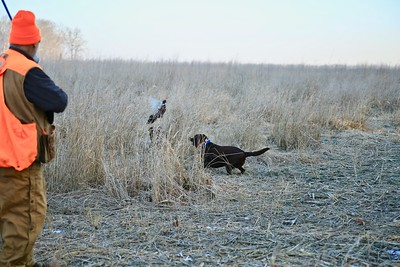 2.3.19 BIRD HUNT AT BENT CREEK....