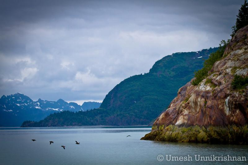 Kenai Fjords cruise 132.jpg