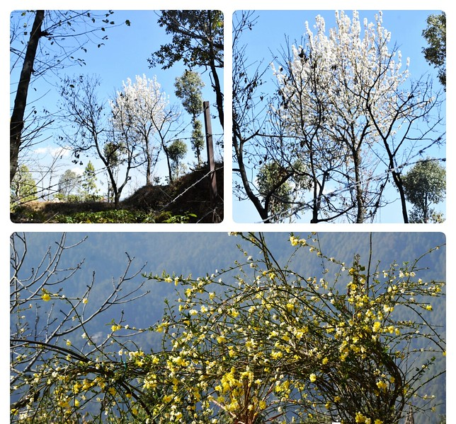 various trees with blooming yellow and white flowers