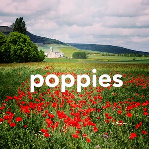 Camino Poppies