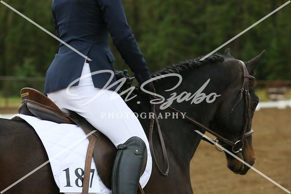 Alberta Morgan Horse Show 2015