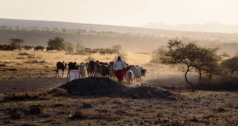 Maasai Youth