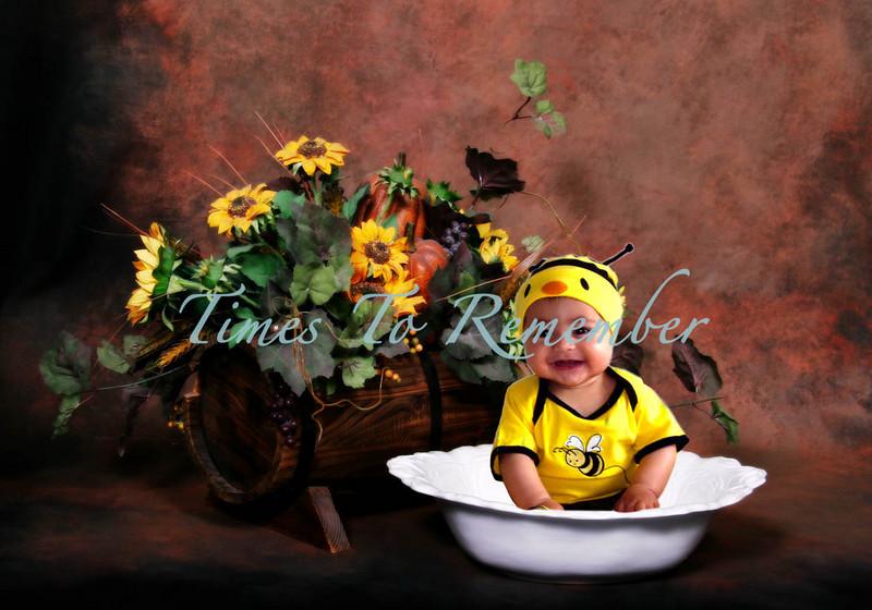 Sunflower and Bee.jpg