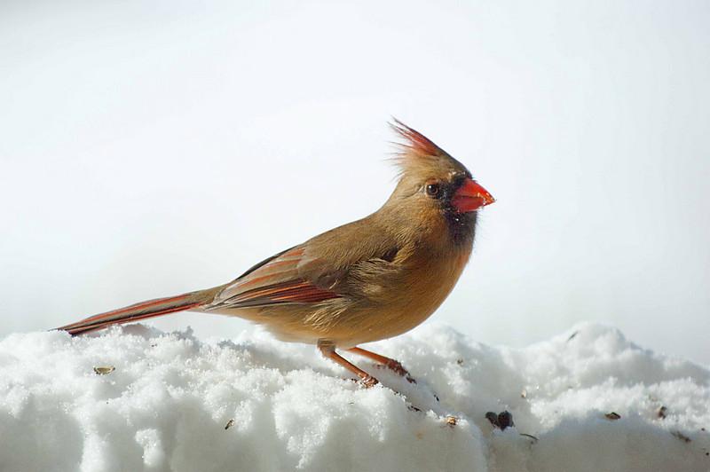 CardinalF1.jpg