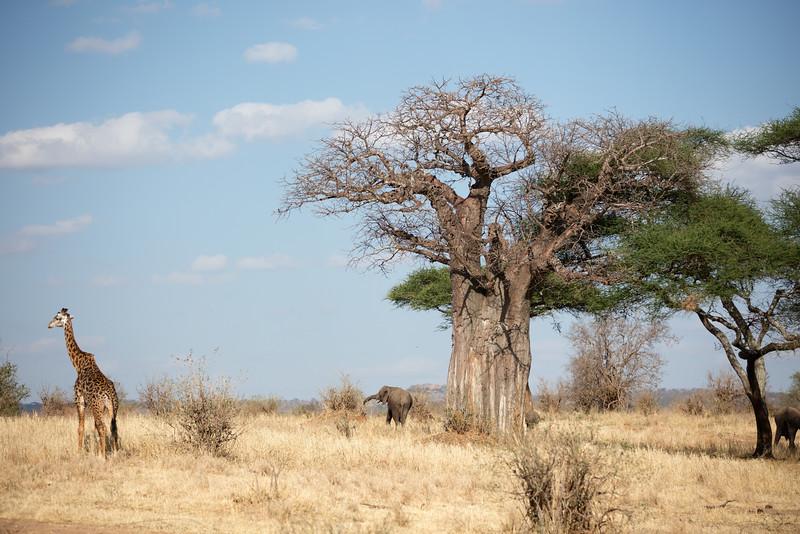 Africa - 101916 - 7812.jpg