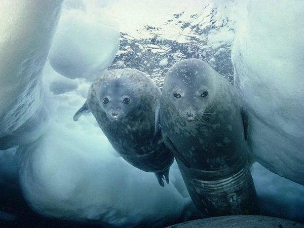 1035352473-Antarctica-12.jpg