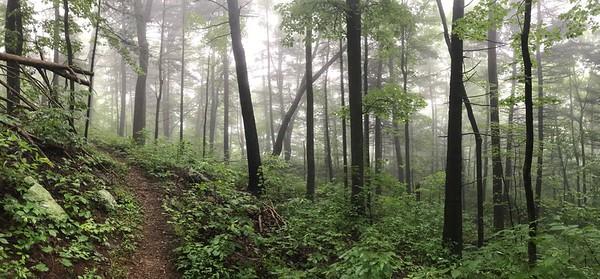 Wildrock and Patricia Ann Byrum Forest Preserve
