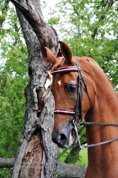 HORSE- TREE SHOT  copy.jpg