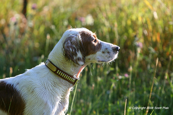 Dog Field Trial