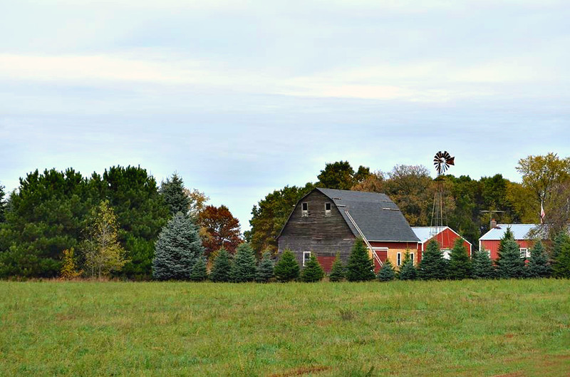 FARM WITH PINES AND WINDMILL
