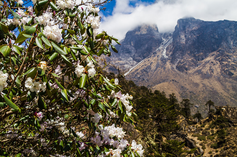 View of flowers with mountain in background - Nepal