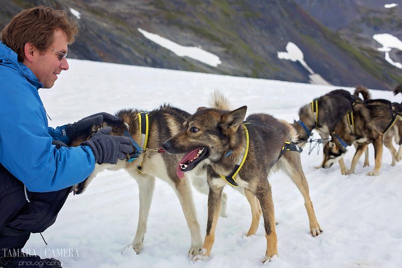 DogSledding2-6-2.jpg